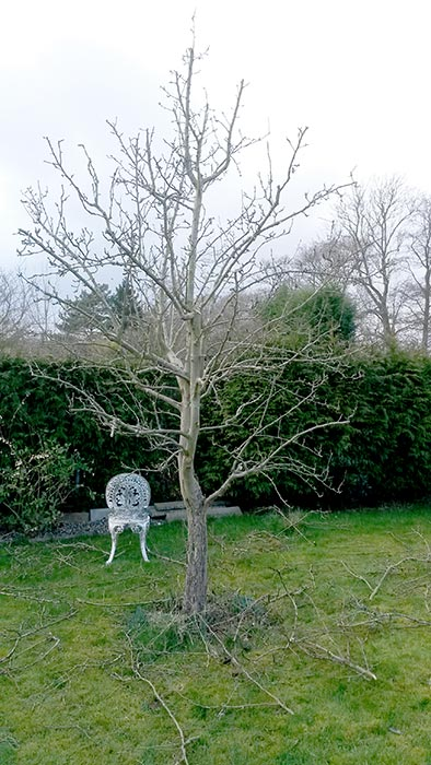 full-pruning-service